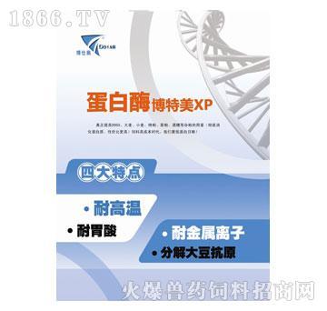 蛋白酶-博特美XP