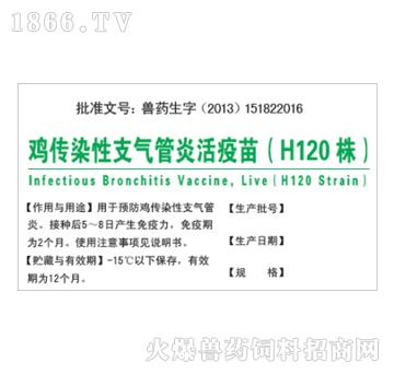鸡传染性支气管炎活疫苗(H120株)-预防鸡传染性支气管炎