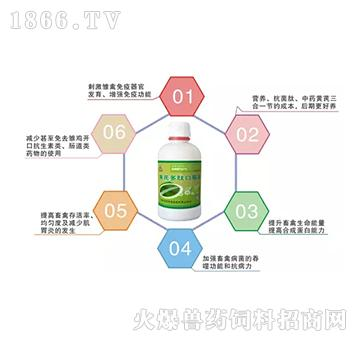 黄芪多肽口服液-治疗畜禽疾病、改善蛋壳质量和颜色