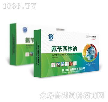 氨苄西林钠-主治顽固性高热病、圆环病毒病的混合感染