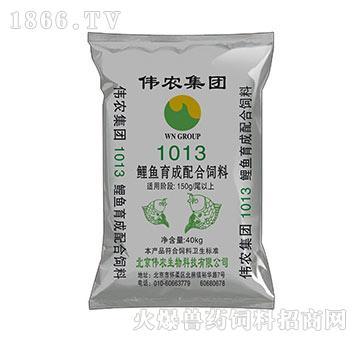 鲤鱼育成期配合饲料1013-适口性好,消化率高,饵料系数低