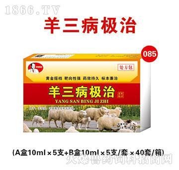 羊三病极治-主治羊快疫、羊肠毒血症和羊猝狙