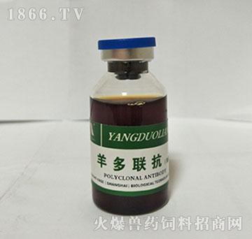 羊多联抗(加强型)-用羊痘、羊快疫、羊肠毒血症、羊猝疽