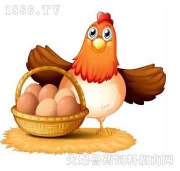 金蛋1000-提高机体免疫力,增强蛋禽的体质