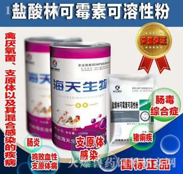 盐酸林可霉素可溶性粉-用于革兰氏阳性菌感染