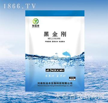 黑金刚-对养殖鱼、虾、蟹、贝类的池塘有快速肥水的作用