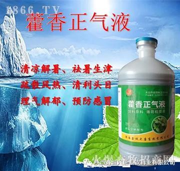藿香正气液-解暑祛湿、肠胃湿泻、止呕增食