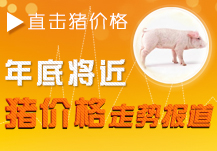 年底将近,猪价格走势报道专题