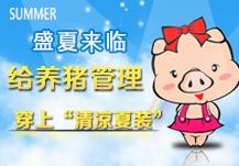 """盛夏来临,给养猪穿上""""清凉夏装""""专题"""