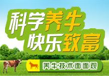 科学养牛 快乐致富
